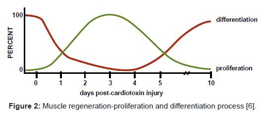 bioengineering-biomedical-science-regeneration-proliferation-process