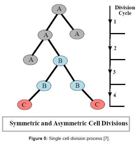 bioengineering-biomedical-science-single-cell-division