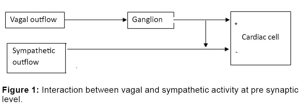 bioengineering-biomedical-science-sympathetic