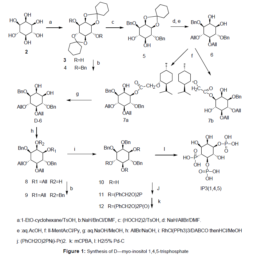 bioengineering-biomedical-science-synthesis-inositol-trisphosphate