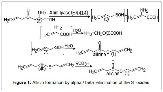 bioequivalence-bioavailability-allicin-formation