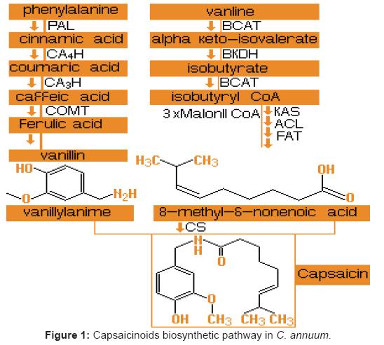 bioequivalence-bioavailability-capsaicinoids