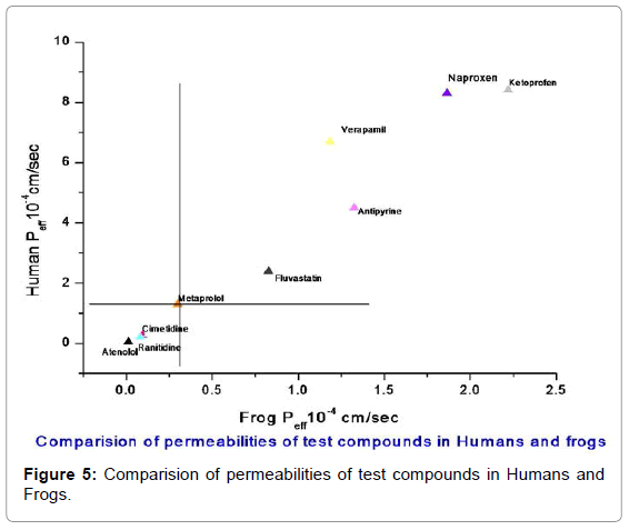 bioequivalence-bioavailability-comparision-compounds