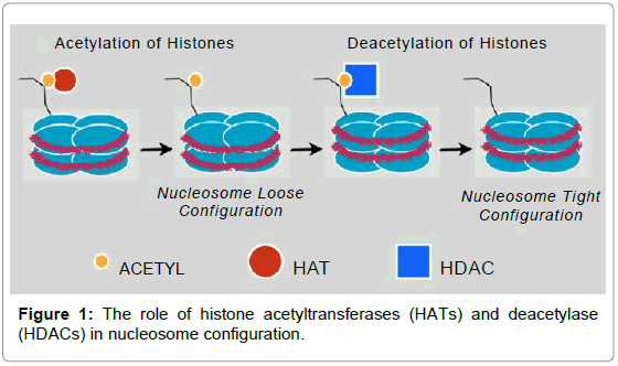 bioequivalence-bioavailability-histone-acetyltransferases-deacetylase