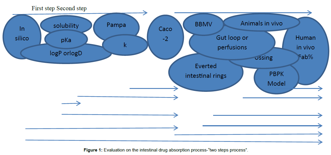 bioequivalence-bioavailability-intestinal-drug-absorption