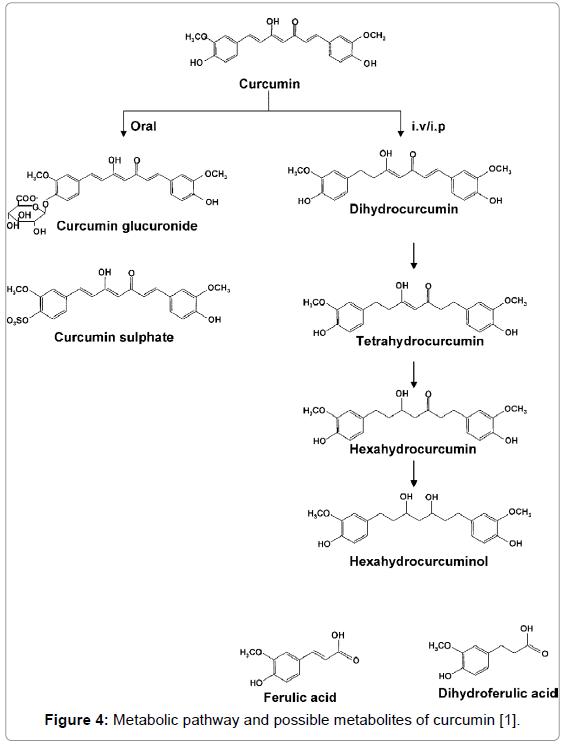 bioequivalence-bioavailability-metabolic-pathway-curcumin