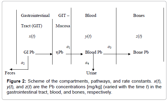 bioequivalence-bioavailability-scheme-compartments