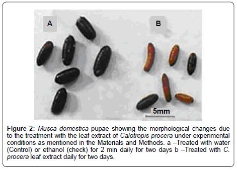 biofertilizers-biopesticides-Calotropis-procera