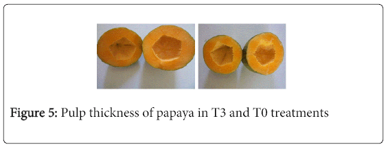 biofertilizers-biopesticides-Pulp-thickness-papaya