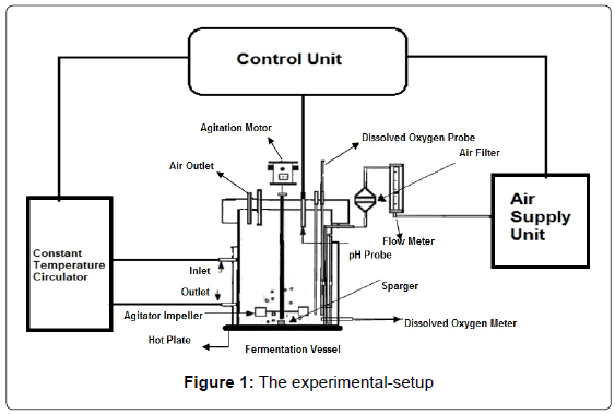 biofertilizers-biopesticides-experimental-setup