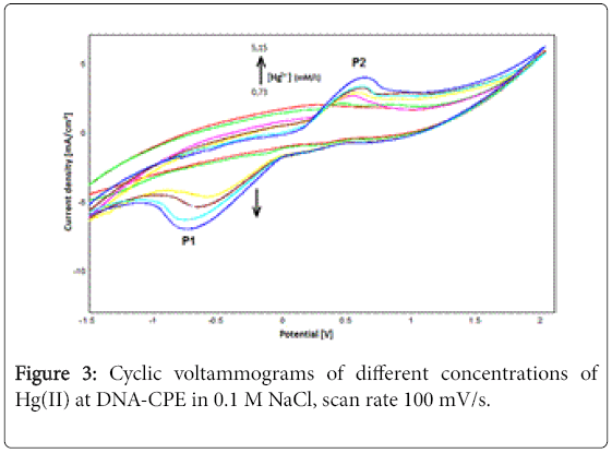 biological-systems-Cyclic-voltammograms