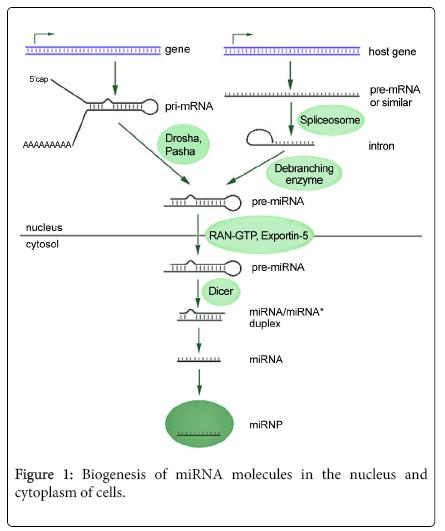biology-and-medicine-Biogenesis-of