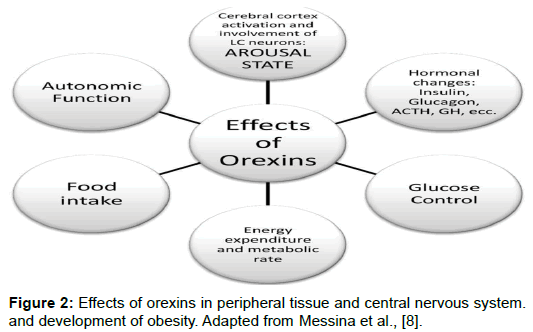 biology-and-medicine-Effects-orexins