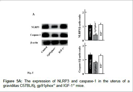 biology-and-medicine-NLRP3-caspase