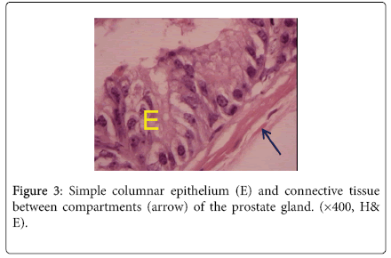 biology-and-medicine-Simple-columnar