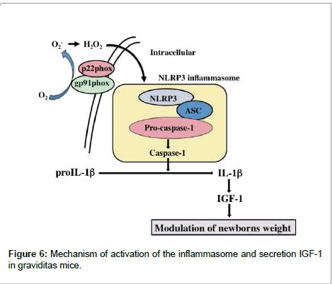 biology-and-medicine-graviditas-mice