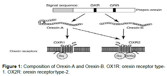 biology-and-medicine-orexin-receptor