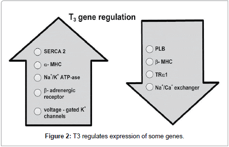 biology-and-medicine-regulates-expression