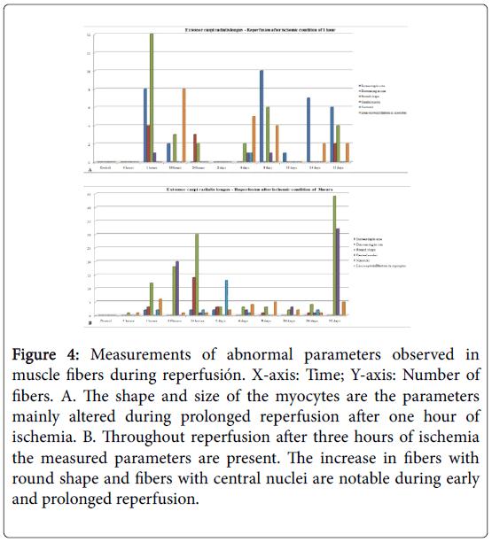 biology-medicine-abnormal-parameters-muscle