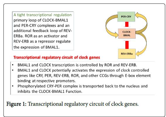 biology-medicine-regulatory-circuit