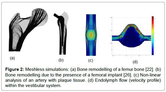 biometrics-biostatistics-meshless-simulations