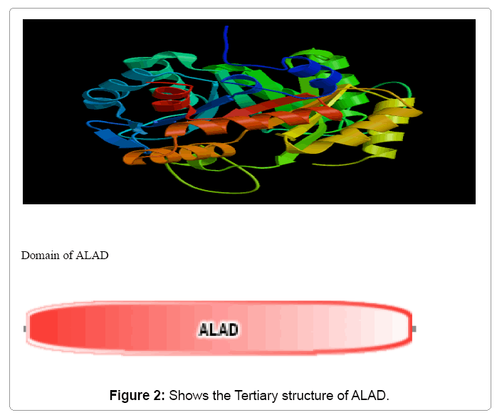 an analysis of enzyme delta amonilevulinate dehydratase alad Gene: [09q34/alad] delta-aminolevulinate dehydratase (porphobilinogen synthase) porphyria, acute hepatic systematic name: 5-aminolevulinate hydrolyase (adding 5-aminolevulinate and cyclizing.