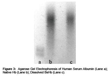 biomimetics-biomaterials-Human-Serum-Albumin