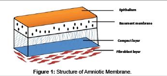 biomimetics-biomaterials-Structure-amniontic-membrane
