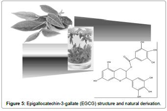 biomolecular-research-therapeutics-epigallocatechin