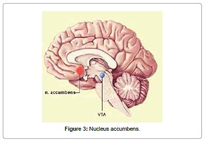 biomusical-engineering-Nucleus-accumbens