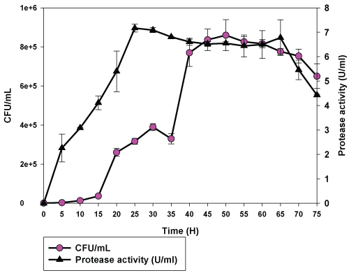 figure 2: time course of growth and protease production by bacillus sp  n235  the data shown are averages of triplicate assays  the error bars  indicate the