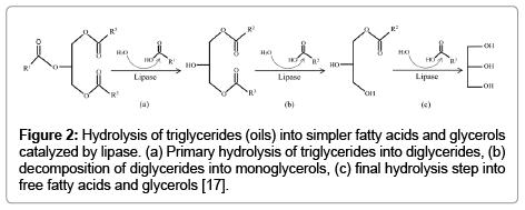 bioprocessing-biotechniques-Hydrolysis-triglycerides