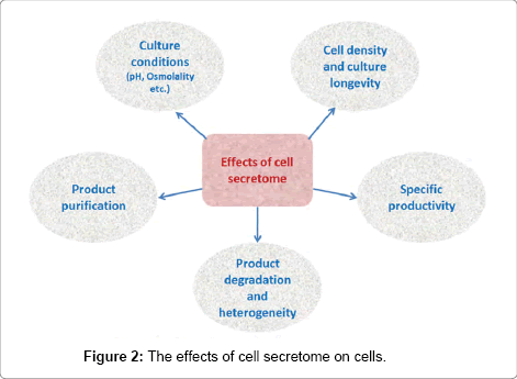 bioprocessing-biotechniques-effects-cell-secretome