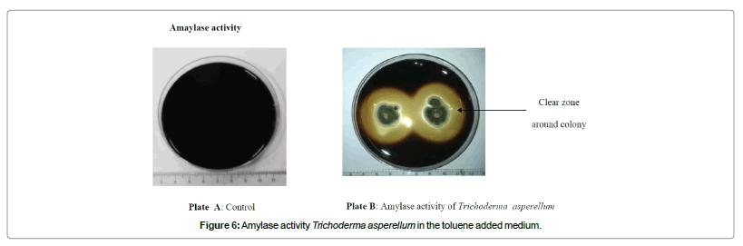 bioremediation-biodegradation-Amylase-activity-Trichoderma