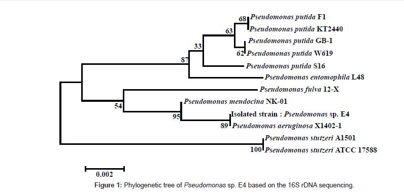 bioremediation-biodegradation-Phylogenetic-tree