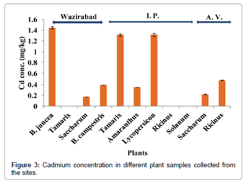 bioremediation-biodegradation-cadmium-concentration-different-plant