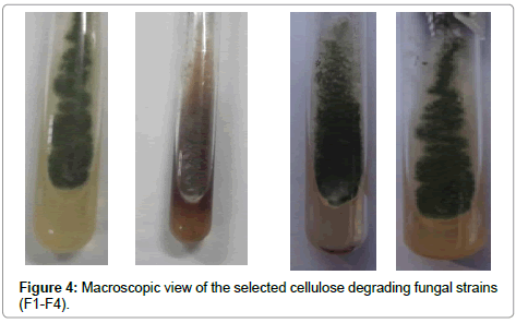 bioremediation-biodegradation-cellulose-degrading-fungal