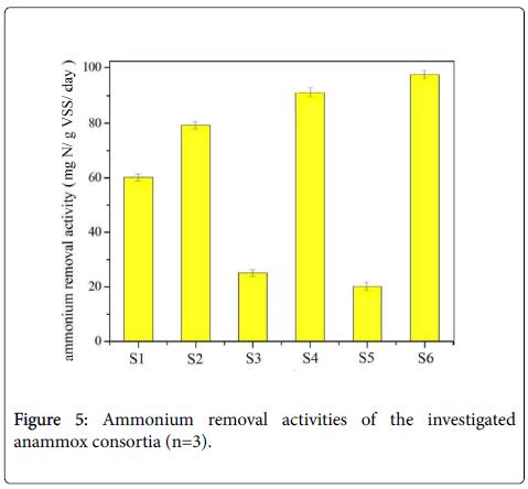 bioremediation-biodegradation-investigated-anammox-consortia