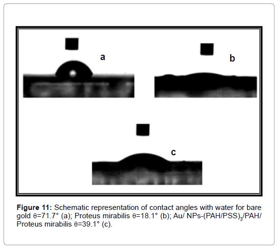 biosensors-bioelectronics-Schematic-representation-contact