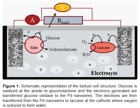 biosensors-bioelectronics-biofuel-cell-oxidized