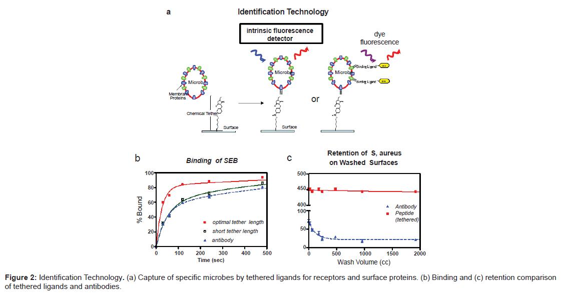 biosensors-bioelectronics-capture-microbes-ligands
