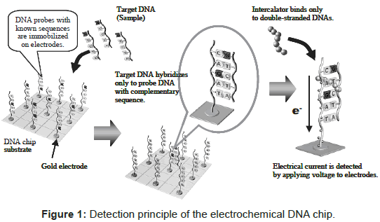 biosensors-bioelectronics-detection-principle-electrochemical