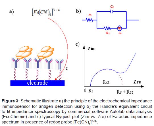 biosensors-bioelectronics-electrochemical-impedance-immunosensor