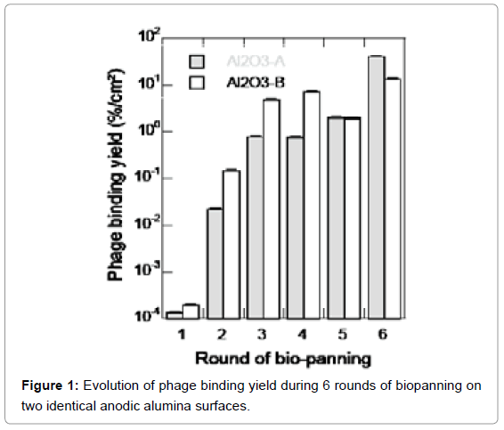 biosensors-bioelectronics-evolution-phage-binding