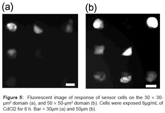 biosensors-bioelectronics-fluorescent-sensor-cells