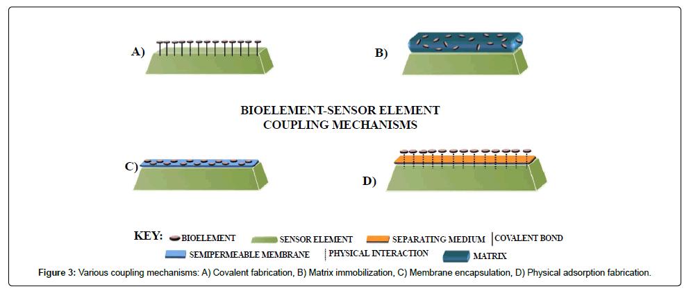 biosensors-bioelectronics-immobilization