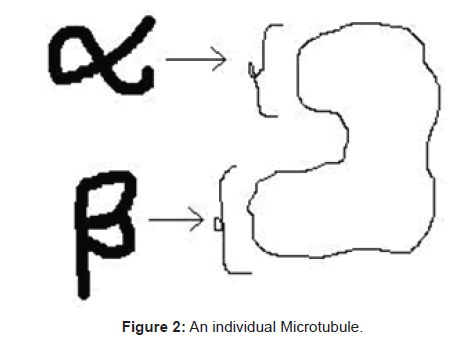 biosensors-bioelectronics-individual-microtubule
