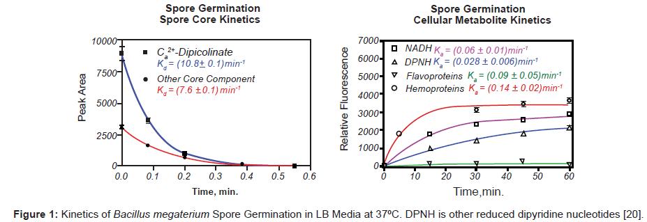 biosensors-bioelectronics-kinetics-spore-germination