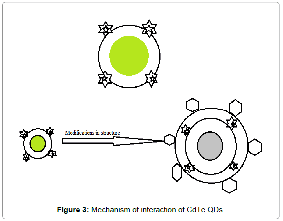 biosensors-bioelectronics-mechanism-interaction