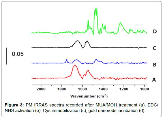 biosensors-bioelectronics-pm-irras-immobilization